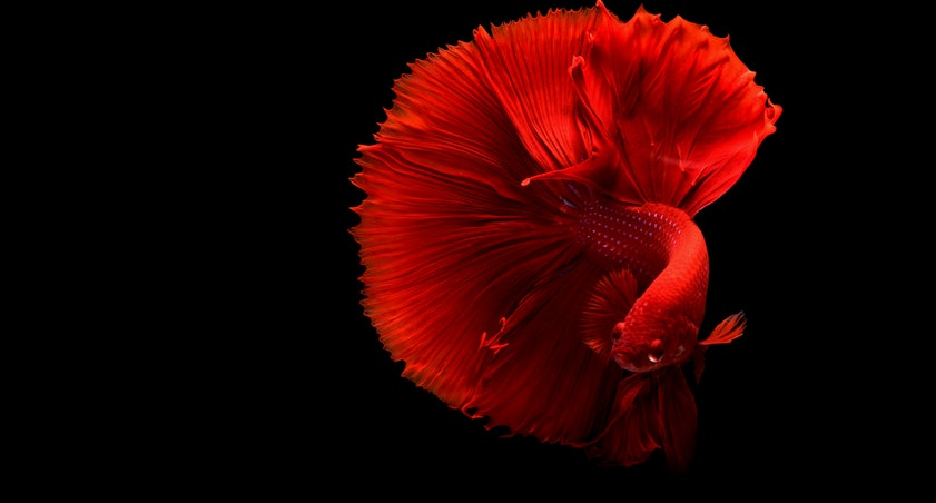 5 awesome things you can learn from best betta fish tanks for Buy betta fish