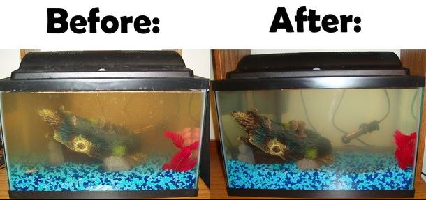 How To Clean Fish Tanks