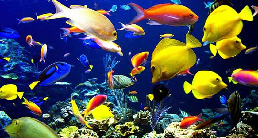 Best Freshwater Aquarium Fish Combination Colorful Aquarium Fish